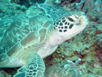 Diving a Zanzibar